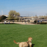 Tutoriales: Cuidados generales del perro
